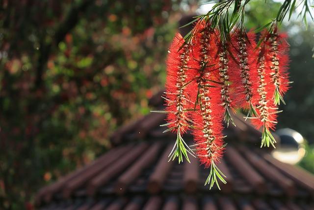 Tree, Nature, Plant, Outdoor, Season, Flower, Close-up