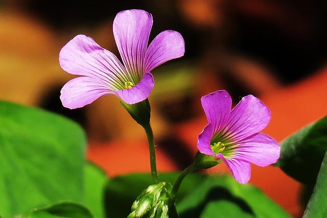 Nature, Outdoor, Flower, Petal, Garden, Leaf