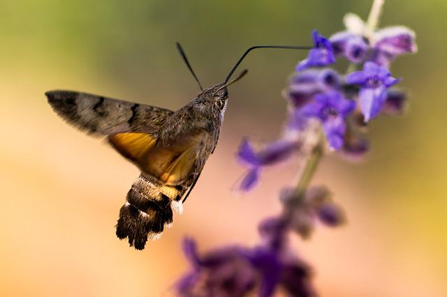 Nature, Flower, Insect, Wing, Outdoor