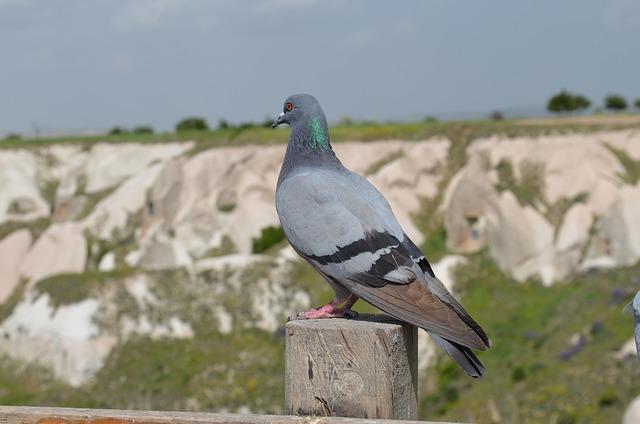 Nature, Outdoor, Birds, No One, Cappadocia