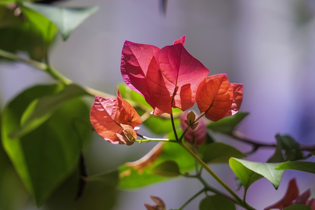Nature, Plant, Leaf, Flower, Outdoor, Garden, Beautiful