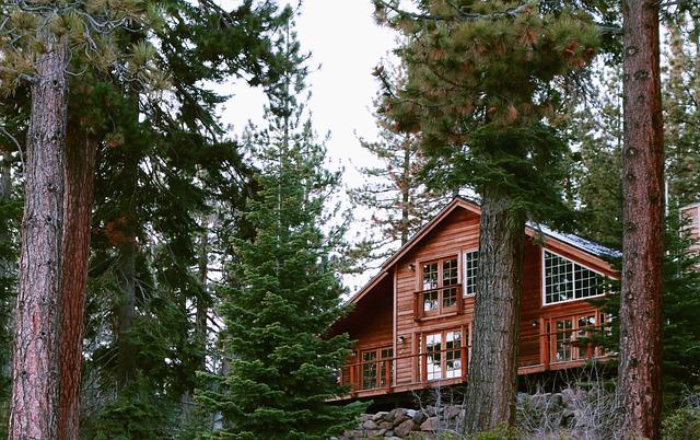 Wood, Tree, Nature, Outdoor