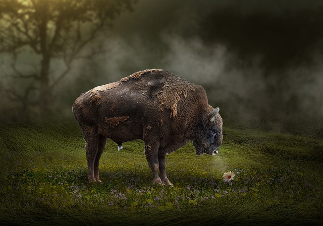 American Bison, Mammal, Grass, Outdoors, Wildlife