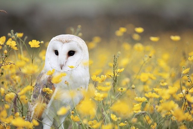 Animal, Bird, Field, Flowers, Grass, Outdoors, Owl