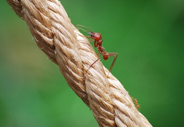 Nature, Outdoors, Rope, Ants, David And Goliath, Small