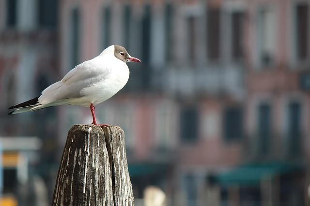 Outdoors, Bird, City, Nature, Wildlife, Animal