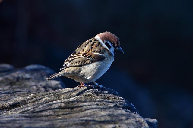 Natural, Bird, Wild Animals, Outdoors, Animal, Sparrow