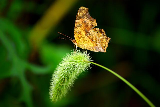Nature, Butterfly, Insects, Outdoors, Leaf, Plants