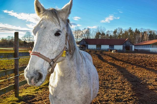 Horse, Nature, Animal, Farm, Economy, Range, Outdoors