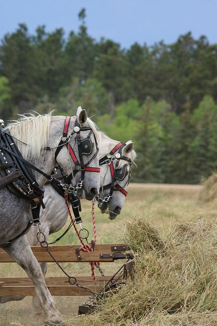 Cavalry, Nature, Outdoors, Farm, Grass, Horses, Cowboy