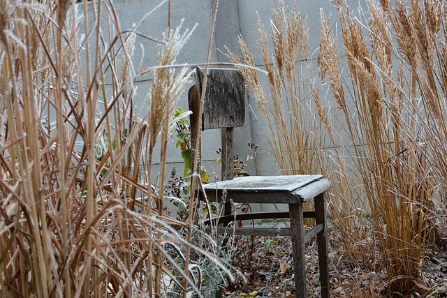 Winter, Chair, Frost, Outdoors