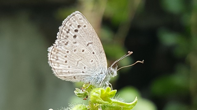 Nature, Insects, Butterfly, Outdoors