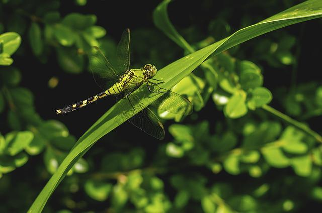 Nature, Leaf, Flora, Outdoors, Environment, Insect