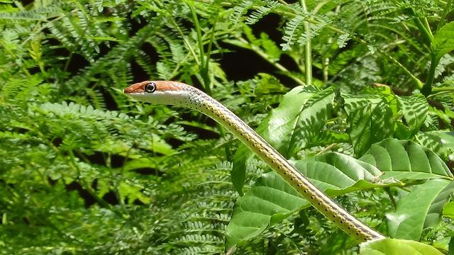 Nature, Leaf, Flora, Outdoors, Summer, Snake, Wildlife