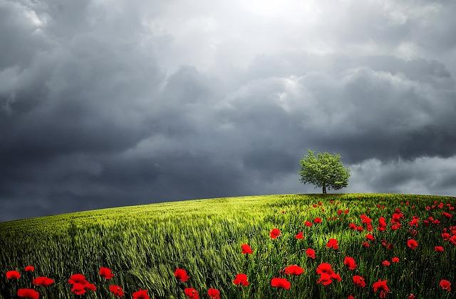 Tree, Summer, Beautiful, Horizon, Meadow, Outdoors