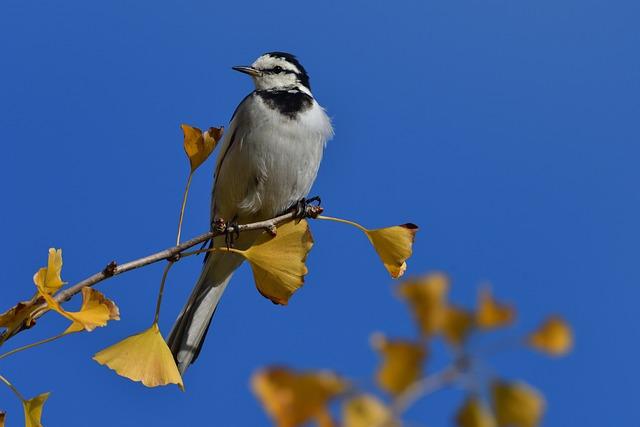 Natural, Bird, Outdoors, Wild Animals, Animal