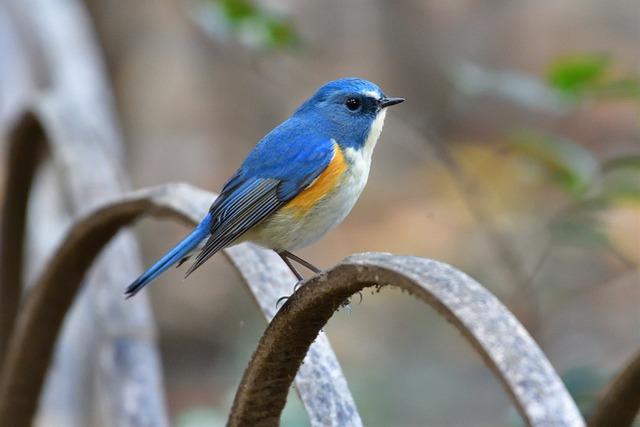 Natural, Bird, Wild Animals, Outdoors