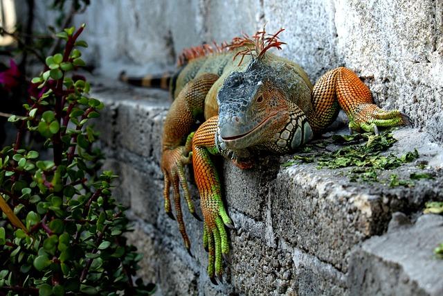 Nature, Animalia, Wild Life, Outdoors, Wild, Reptilia