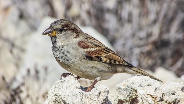 Nature, Bird, Wildlife, Animal, Outdoors, Feather