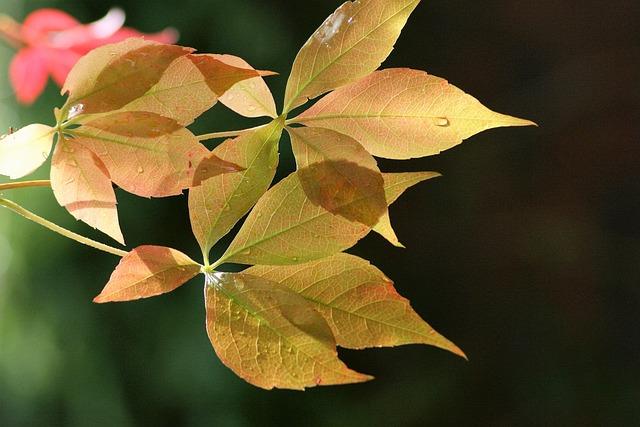 Leaf, Nature, Outdoors, Fall, Flora, Tree
