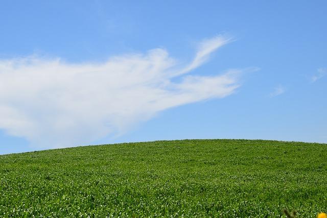 Nature, Panoramic, Summer, Outdoors, Field, Durum Wheat