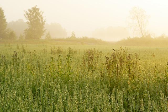 Sunrise, Summer, Landscape, Bright, Nature, Outdoors