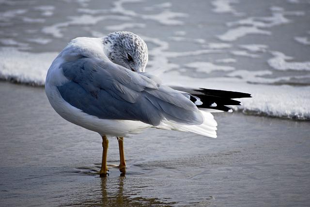 Water, Bird, Outdoors, Sea, Nature, Wildlife, Ocean