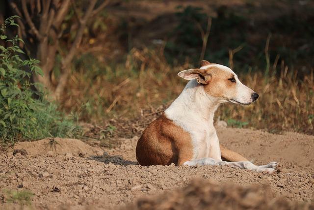 Animal, Nature, Mammal, Outdoors, Dog, Cute, Wildlife