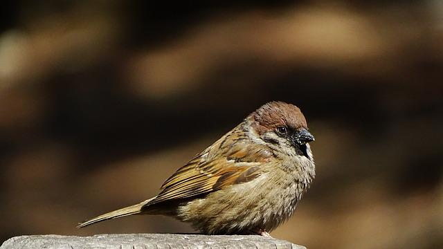 Nature, Wildlife, New, Animal, Outdoors, Sparrow