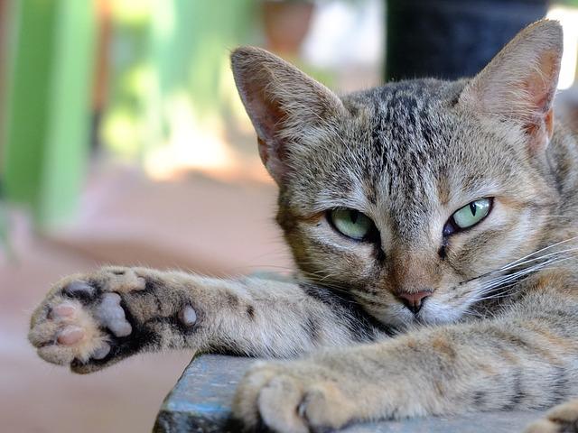 Goa, India, Cat, Paw, Outdoors, Sunny, Day, Green