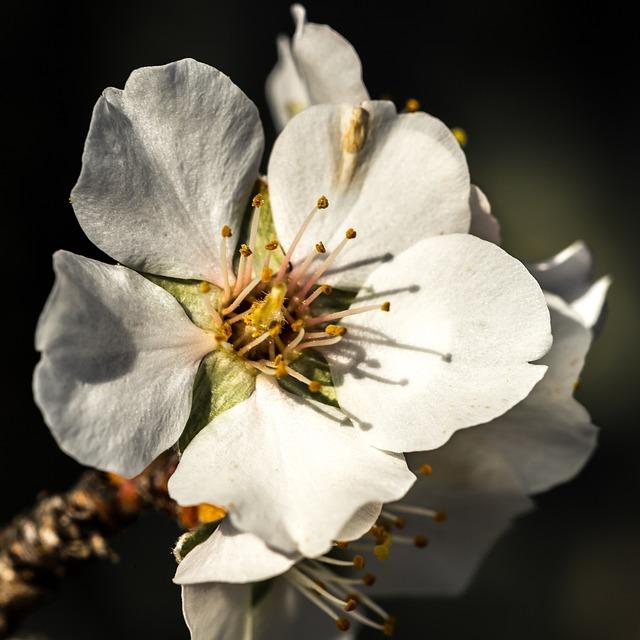 Flower, Nature, Plant, Petal, Outdoors