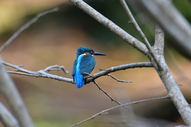 Waters, Natural, Outdoors, Pond, Kingfisher