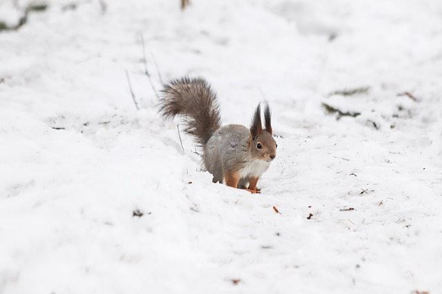 Snow, Winter, Coldly, Nature, Rodent, Outdoors