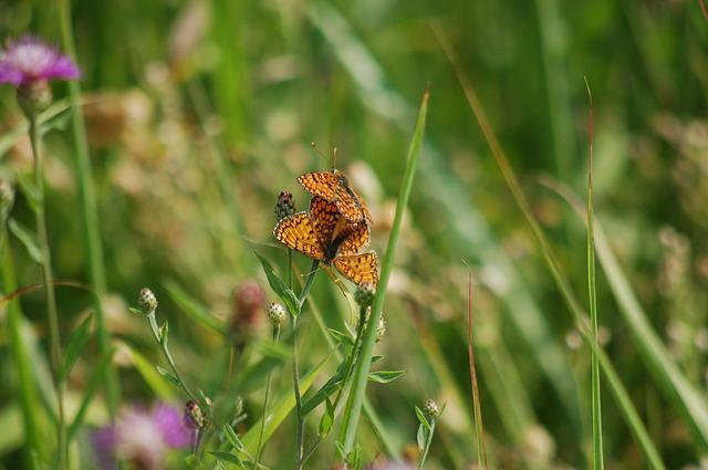 Summer, Butterflies, Freedom, Outdoors, Nature, Prato