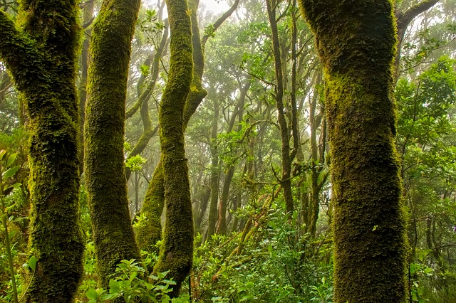 Landscape, Forest, Trees, Jungle, Nature, Outdoors