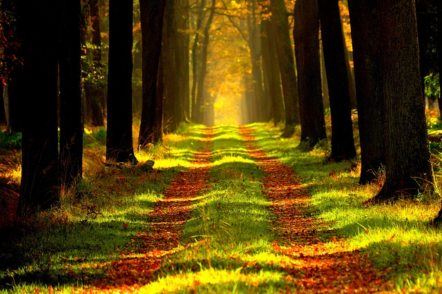 Forest, Path, Trees, Alley, Outdoors, Sunny, Summer