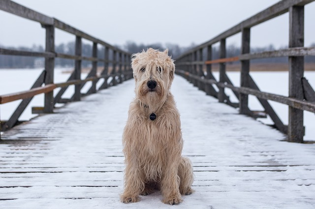 Dog, Animal, Canine, Bridge, Sit, Water, Outdoors