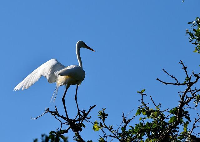Bird, Wildlife, Nature, Animal, Outdoors, Wing, Heron