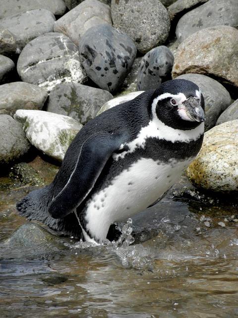 Wildlife, Bird, Nature, Animal, Frosty, Outdoors, Water