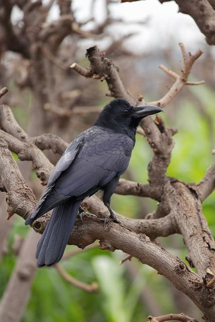 Bird, Wildlife, Nature, Animal, Wing, Outdoors, Tree