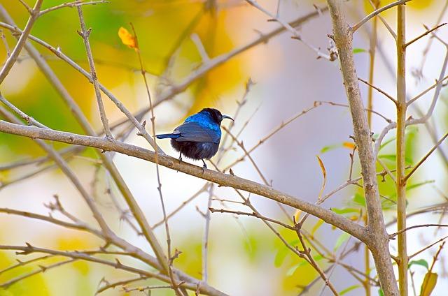 Bird, Wildlife, Nature, Tree, Outdoors, Wing, Park