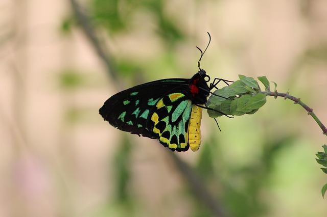Butterfly, Insect, Nature, Wing, Outdoors, Summer