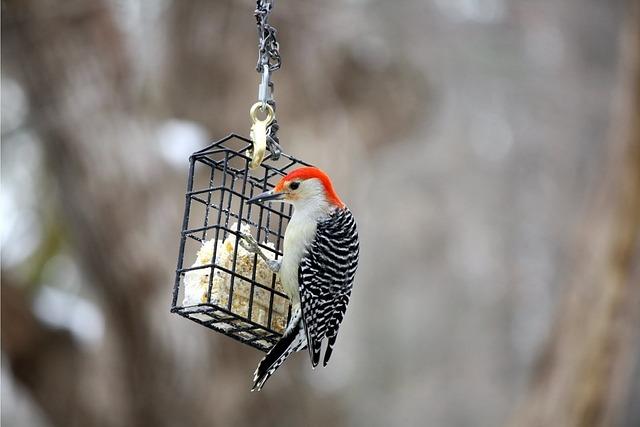 Bird, Wildlife, Nature, Outdoors, Woodpecker