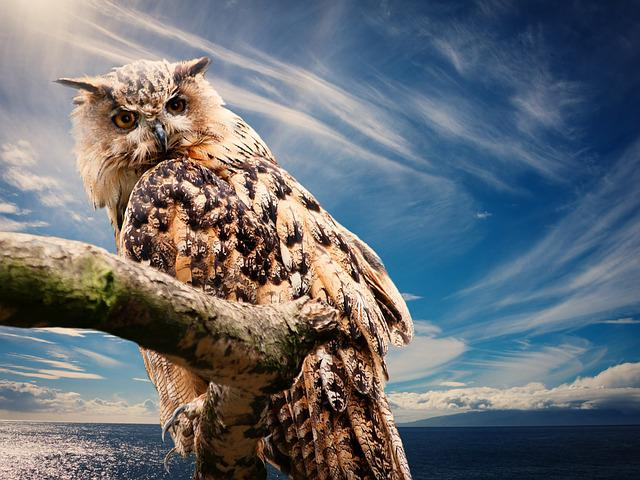 Owl, Nature, Sky, Clouds, Outlook, Animal, Bird