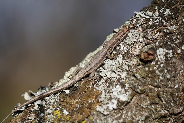 Lizard, Camouflage, Nature, Outside, Forest, Wilderness