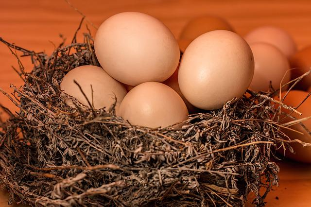 Nest, Eggs, Full, Overflowing, Overcrowded, Cramped