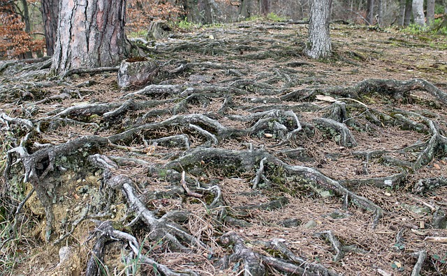 Forest Floor, Root, Overgrown, Gnarled, Root System