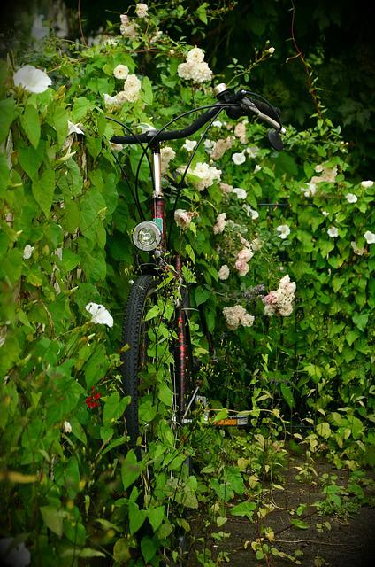 Scrub, Overgrown, Bike, Flowering Shrub