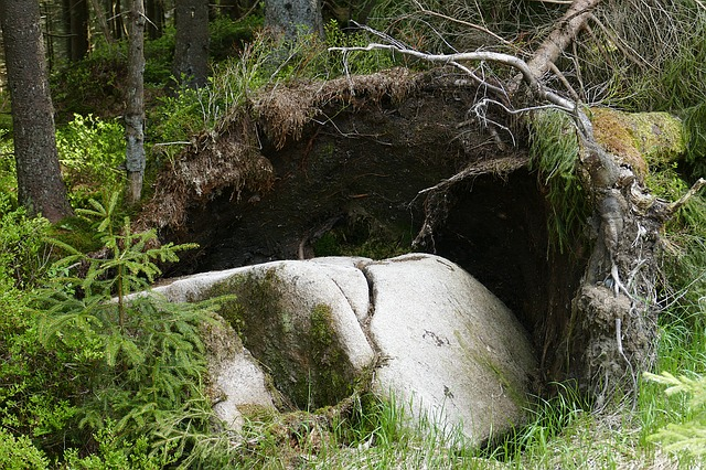Rock, Tree, Root, Forest, Overturned