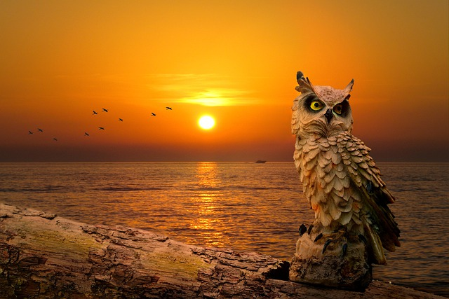 Scenery, Sunset, Dusk, Owl, Portrait, Animal Portrait